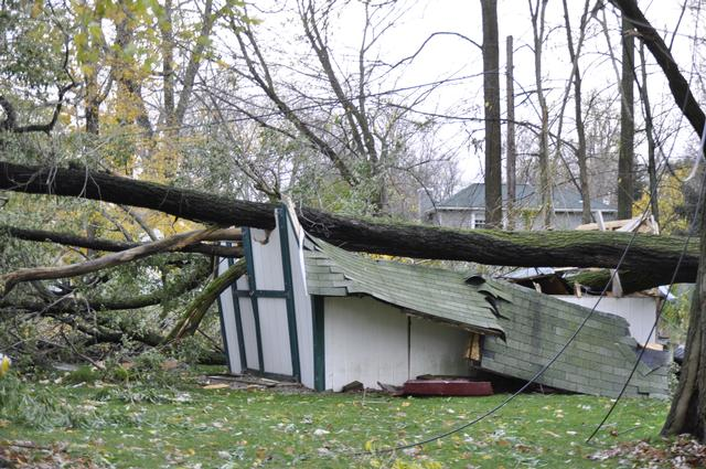 Aftermath of Super Storm Sandy.  This tree came down on a shed also taking down power lines in the area of Adeline Dr.  October 2012