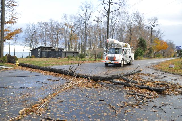 Tree takes power lines down after Super Storm Sandy October 2012